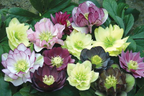Easy Spring Flowering Shade Plants